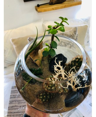 Terrarium and boule de verre
