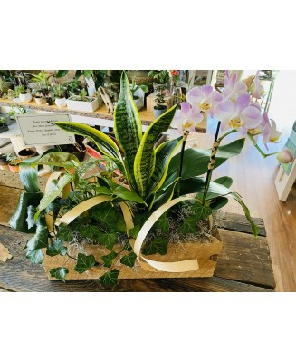 Basket of plants with orchid